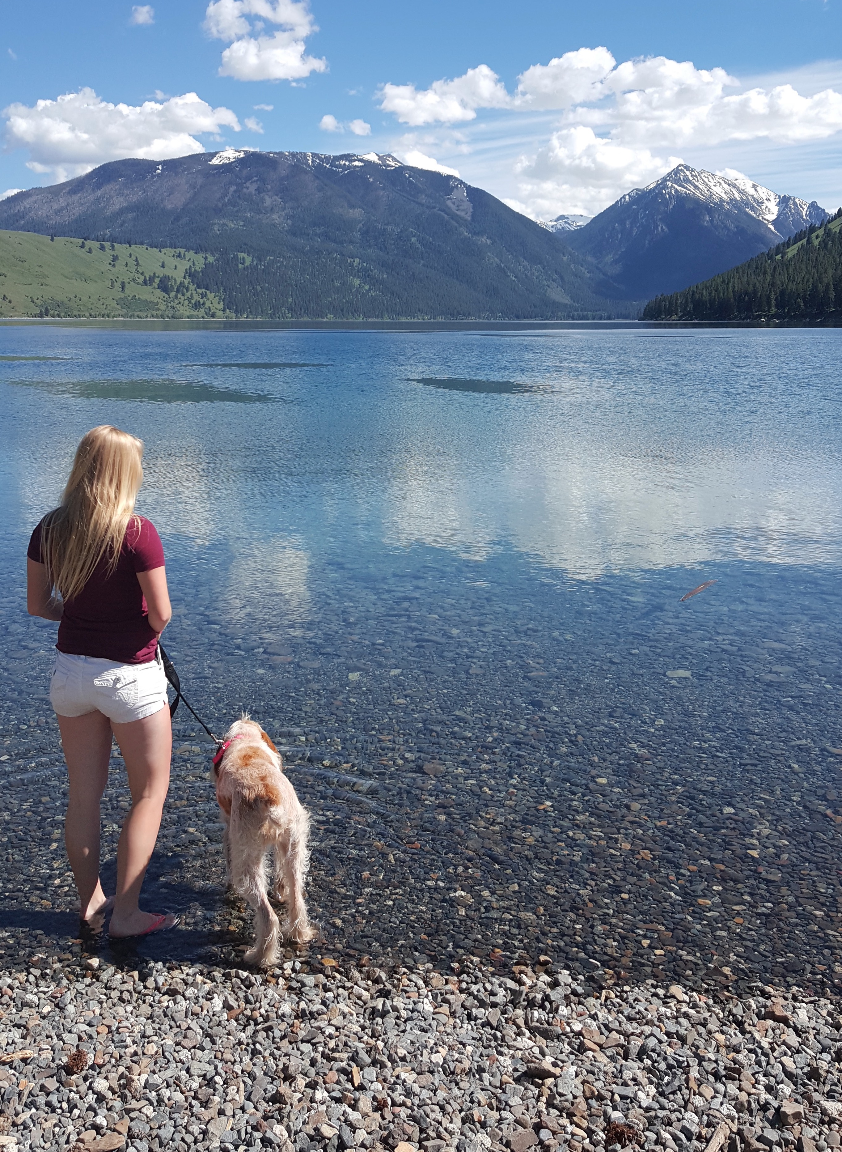 Emma and Fausti enjoying the view of Wallowa Lake on our way to her hunt test.